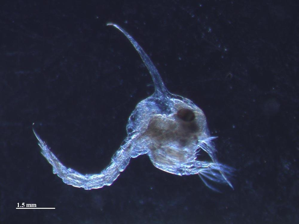 Marine Scotland Monitoring Marine Zooplankton - Marine ...