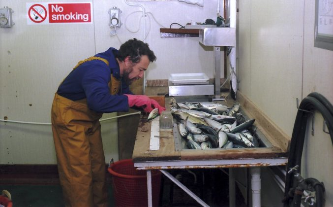 Scientist working on mackerel, Jan 1994