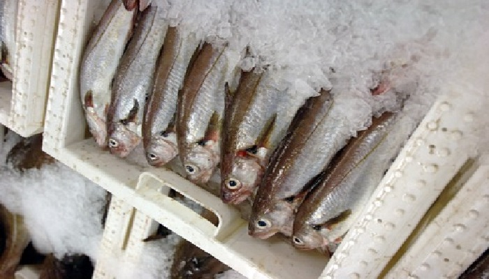 Image of whiting