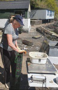 Tobermory Oysters - Shauna