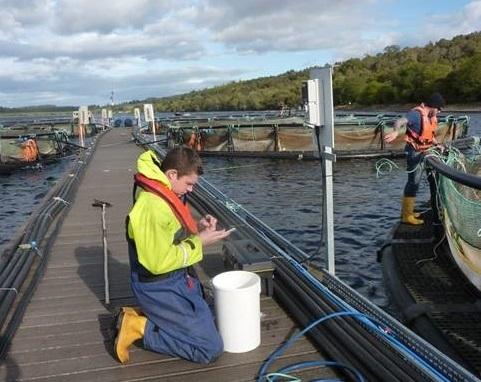 Fish inspector examining fish for sea lice