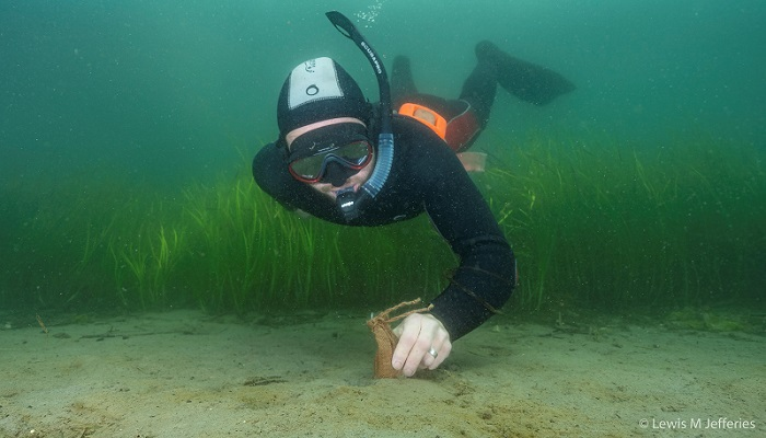 Project Seagrass - diver with hessian bag - copyright Lewis M Jeffries