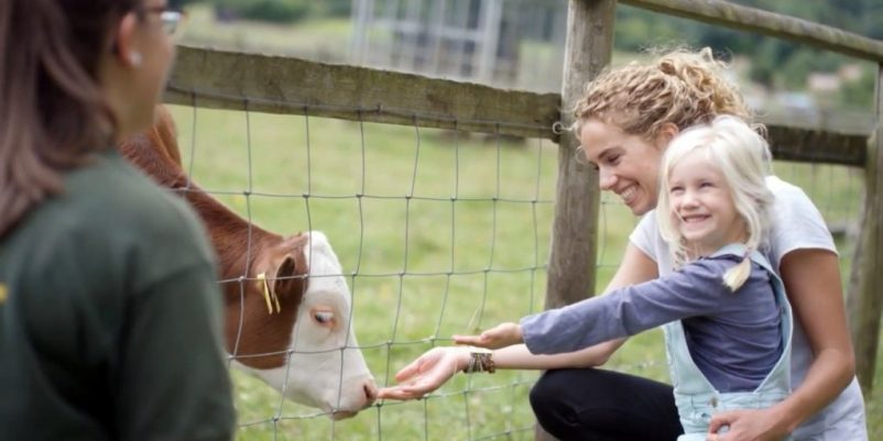 Picture of a farming family projecting families wellbeing. Mother and daughter are feeding a cow.