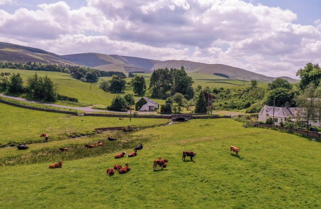 Picture of Scottish Agricultural Landscape in a hilly upland region. The picture is taken in Summertime and has a field of cows in the foreground. It is taken from a wide-lens and conveys the theme of making better use of data for land-use and environment